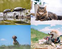 乌龟猫咪动物摄影高清图片
