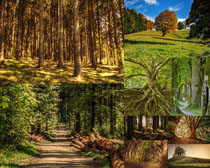 植物樹木風光攝影高清圖片