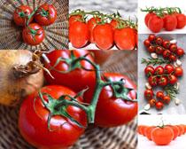 新鲜的西红柿摄影高清图片