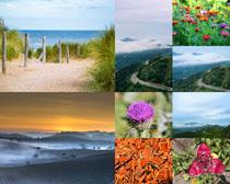 风景花朵道路摄影高清图片