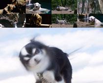 森林动物写真拍摄高清图片