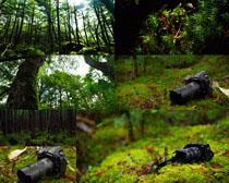 森林风景与数码相机摄影高清图片