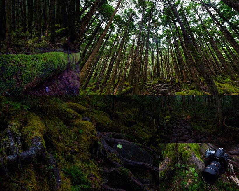 树木植物森林摄影高清图片