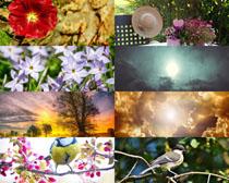 花朵風景小鳥拍攝高清圖片