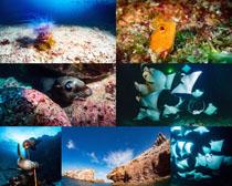 海底生物動物拍攝高清圖片