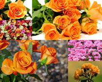 美麗的鮮花花朵拍攝高清圖片