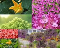 春天花朵景色拍攝高清圖片