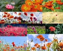 漂亮的美麗花朵攝影高清圖片