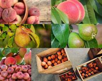 桃子与梨摄影高清图片