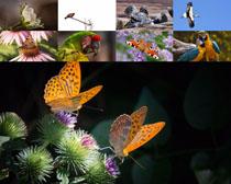 美麗蝴蝶鴿子攝影高清圖片
