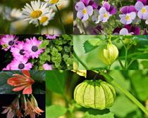 春天美麗花草攝影高清圖片