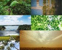 美麗天空植物風景拍攝高清圖片