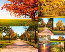 秋天树木风景拍摄高清图片