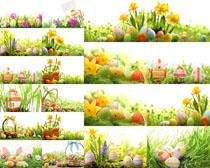 花草彩蛋攝影高清圖片