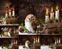 蠟燭與貓頭鷹節日攝影高清圖片