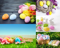 彩色鸡蛋花朵摄影高清图片