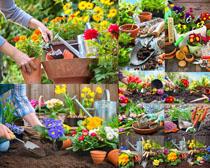 盆栽花朵攝影高清圖片