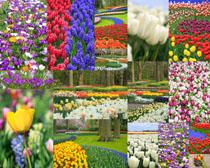美麗鮮花攝影高清圖片