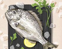 海魚食材展示PSD素材