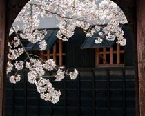 梅花花朵艺术风时时彩投注平台