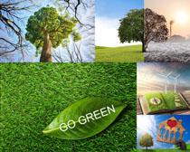 植物風景環境攝影高清圖片