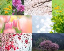 春天花朵葉子風景攝影高清圖片