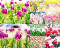 花叢鮮花拍攝高清圖片