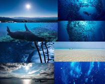 海洋海底风光摄影时时彩娱乐网站
