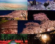 夜色树木景观摄影时时彩娱乐网站