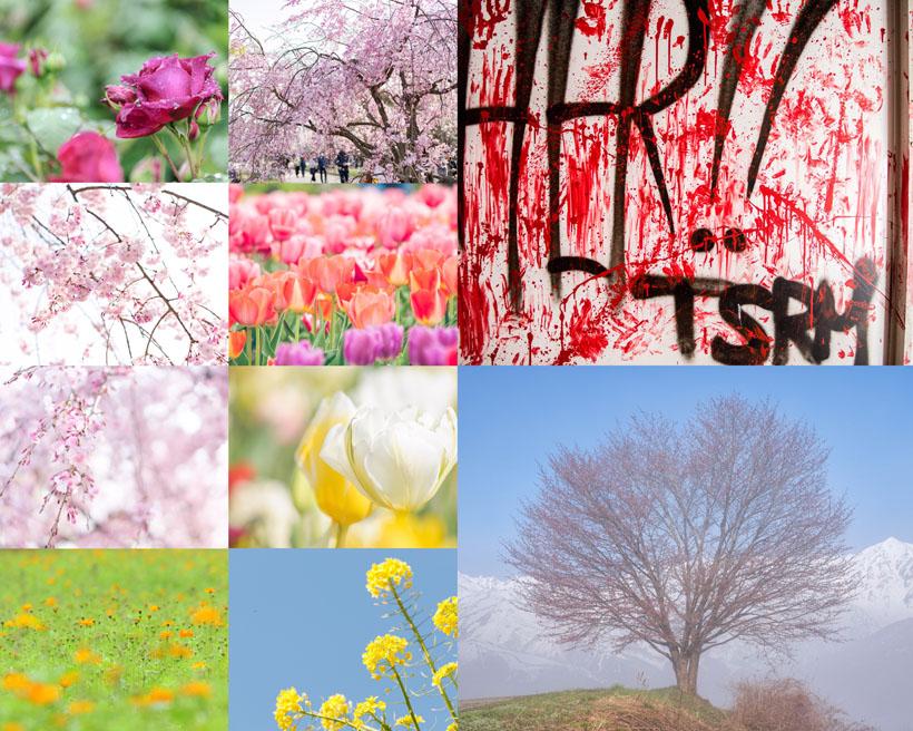 花朵美景攝影高清圖片