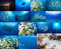 海底生物魚攝影高清圖片