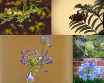 漂亮的花朵展示攝影高清圖片
