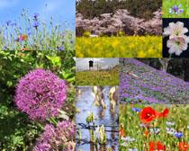 漂亮的花草景色攝影高清圖片