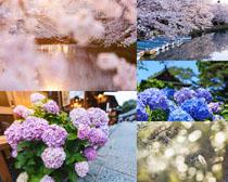 春天花朵風景攝影高清圖片