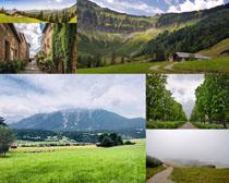 草原树木风景摄影高清图片
