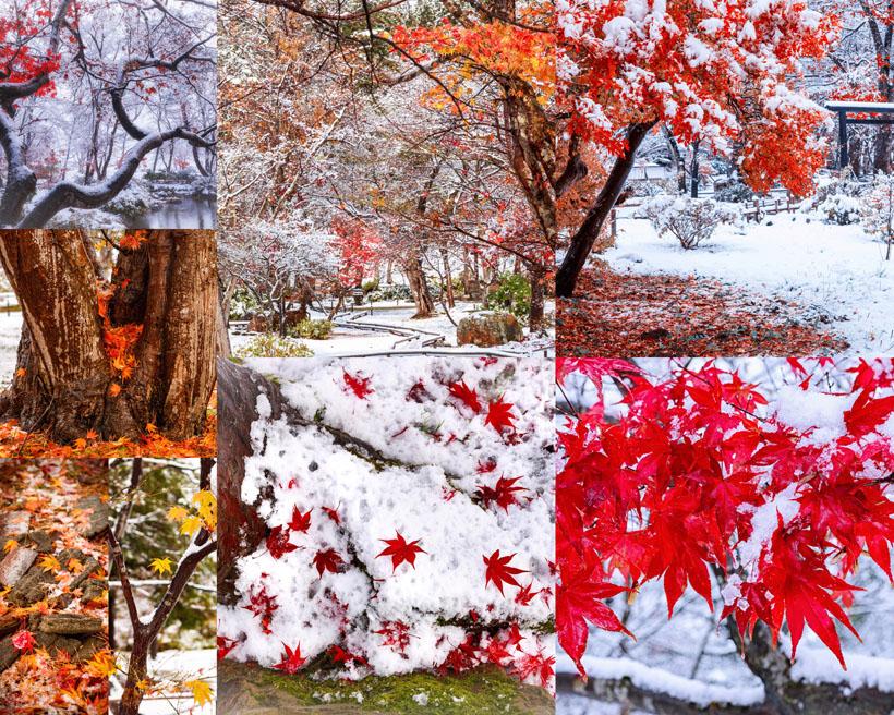 紅葉雪景拍攝高清圖片