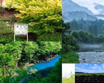 树木河流风光摄影高清图片