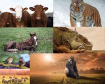 森林动物拍摄高清图片