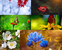 美麗的蝴蝶與花朵攝影高清圖片