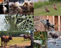 各种动物写真摄影高清图片