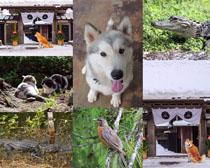 陸地鳥類動物攝影高清圖片