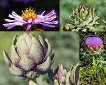 多肉与花朵摄影高清图片
