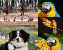 袋鼠鸚鵡小狗動物攝影高清圖片