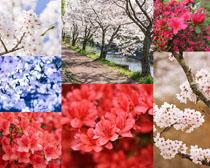 美麗的花朵展示攝影高清圖片