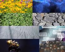 花朵石头风光摄影高清图片