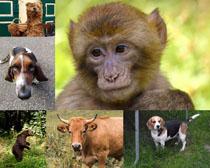 猴子狗狗牛動物攝影高清圖片