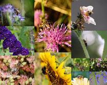 美麗的花朵與蜜蜂攝影高清圖片