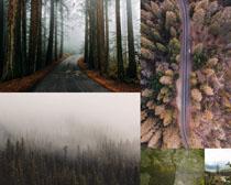 森林�淠镜缆�z影高清�D片