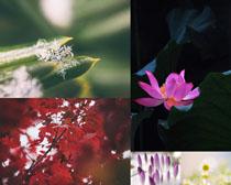 美丽自然花朵摄影高清图片