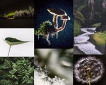 大自然风光摄影高清图片